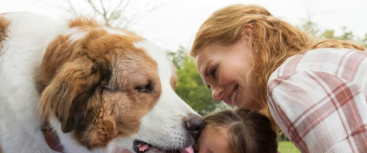 Watch A Dog's Journey