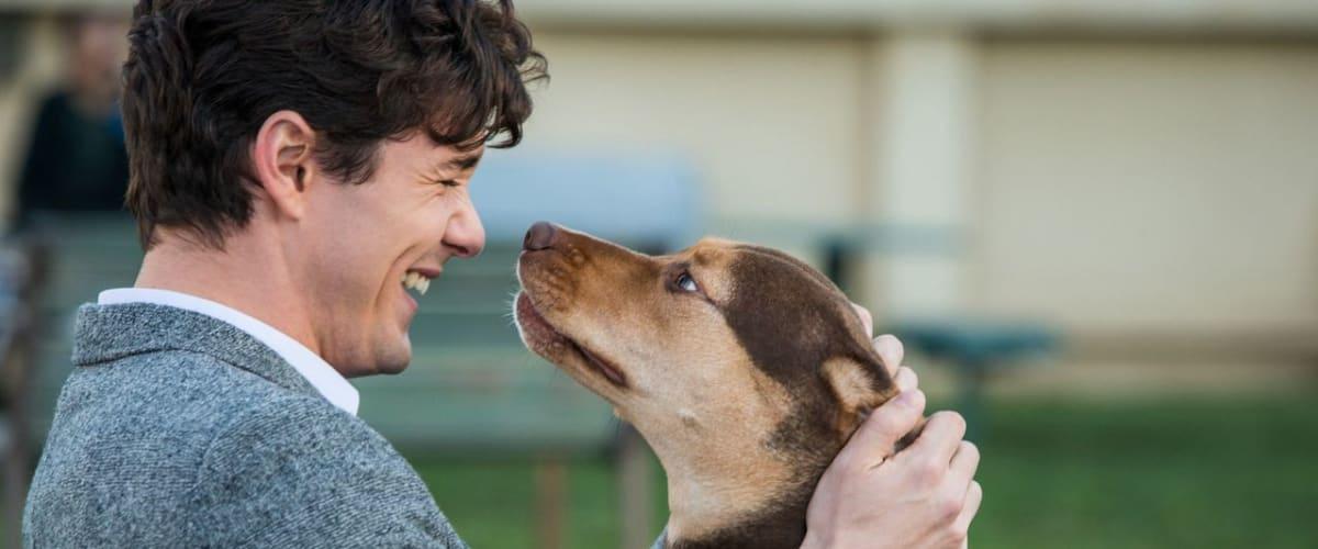 Watch A Dog's Way Home