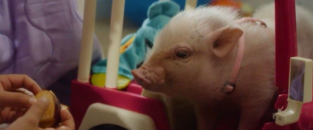 Watch Arlo: The Burping Pig