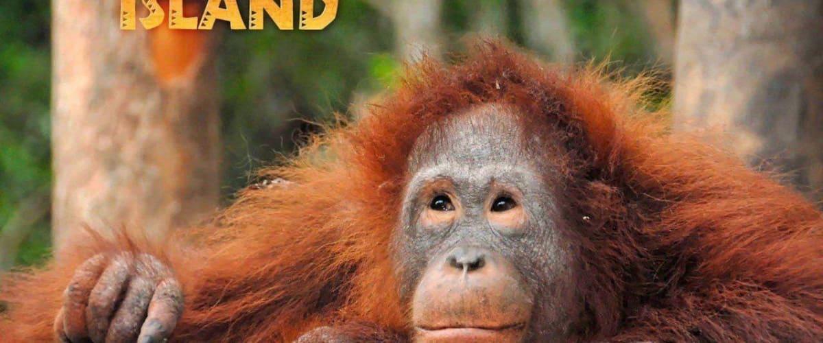 Watch Orangutan Island - Season 1