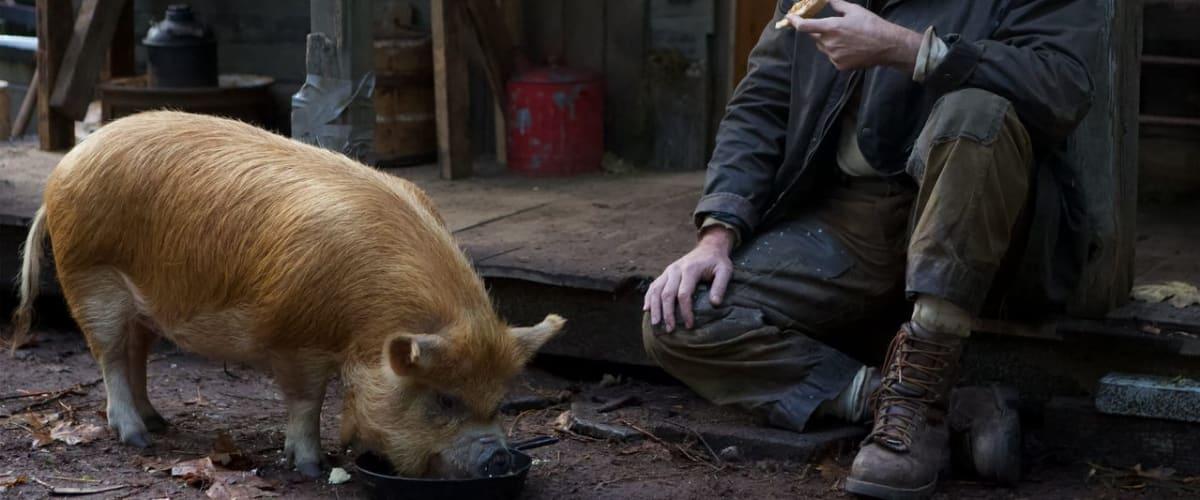 Watch Pig