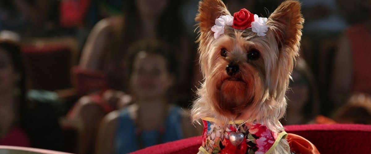 Watch Pup Star: World Tour