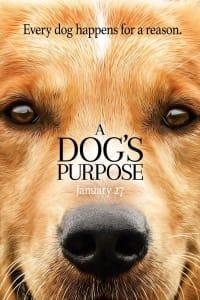 A Dog's Purpose   Bmovies
