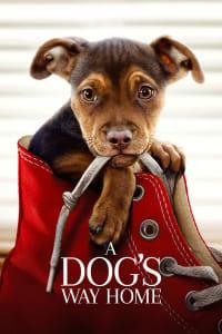 A Dog's Way Home | Bmovies