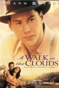 A Walk In The Clouds | Bmovies