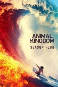 Animal Kingdom - Season 4 | Bmovies