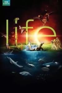 Life (2009) - Season 01 | Bmovies