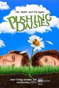 Pushing Daisies - Season 1 | Bmovies