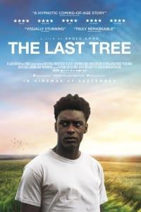 The Last Tree | Bmovies