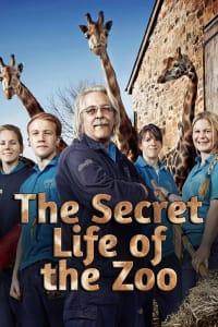 The Secret Life of The Zoo - Season 4 | Bmovies